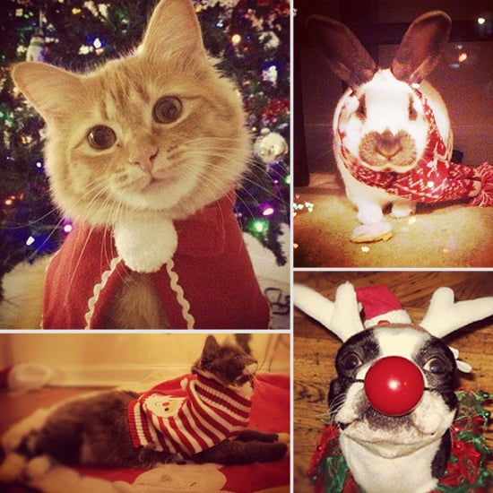 Pets Wearing Holiday Clothes
