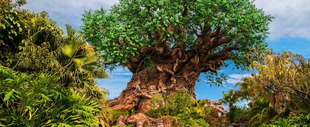 Ways Disney Parks Are Becoming More Sustainable