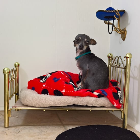 Miniature Bedroom For Chihuahua