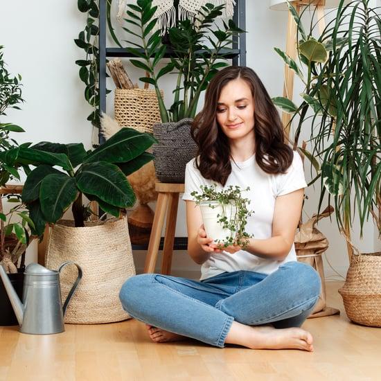 نباتات منزلية رائعة