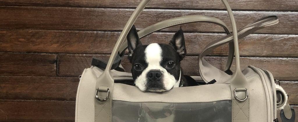 Maxbone Global Citizen Pet Carrier Bag Review