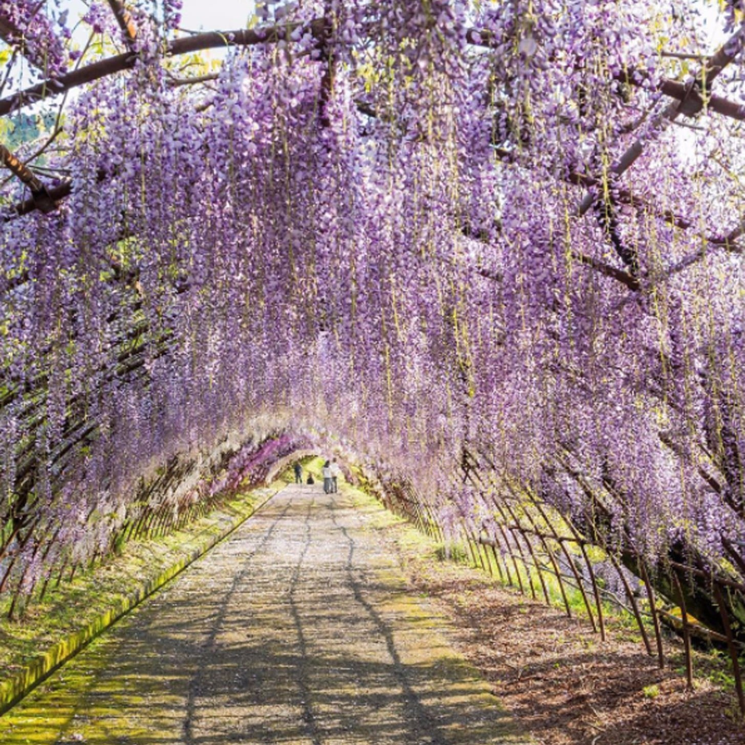 Japan Wisteria Tunnel Popsugar Middle East Smart Living