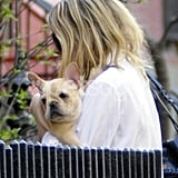 Ashley Olsen Gets a French Bulldog 2010-04-07 15:10:59