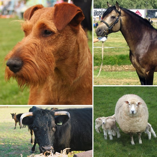 Erin Go Dog: Irish Breeds of Canines, Horses, and Other Animal Friends