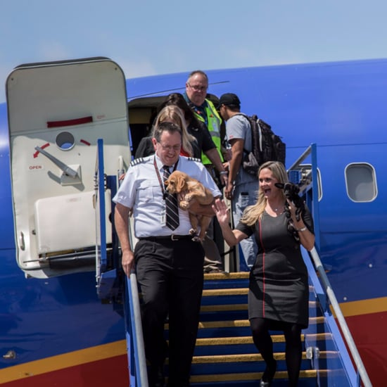 Southwest Airlines Evacuates Pets Out of Houston