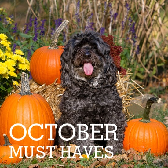 Howl and Yowl With PetSugar's October Must Haves