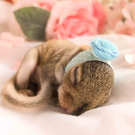 Newborn Squirrel Photo Shoot