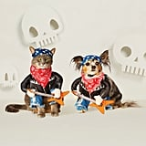 Rockstar Boy Dog Costume