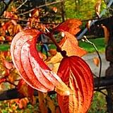 Autumn Leaves in Wasserfallen - BL - Switzerland