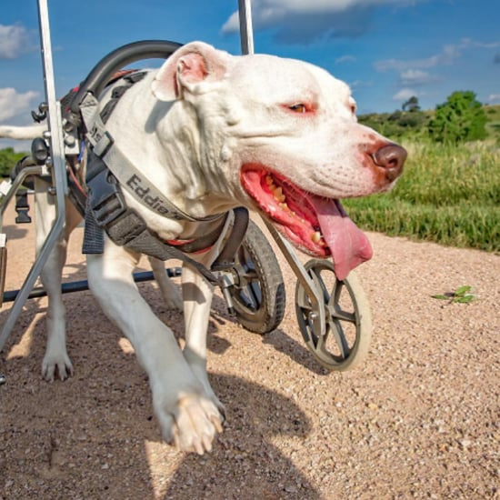 Disabled Dog Gets to Enjoy Adventures With Owner
