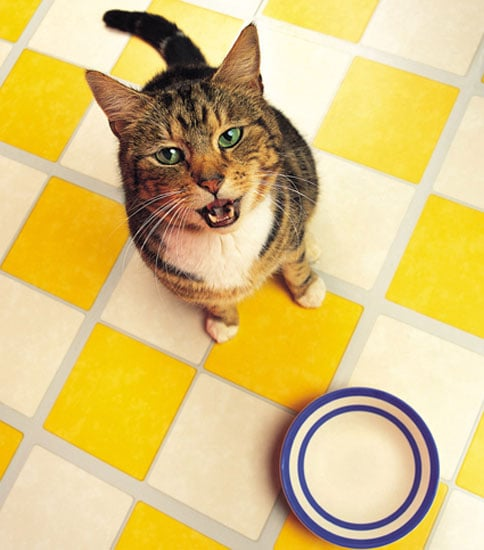 Don't Feed Dog Food to a Cat!