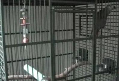Paul the Parrot Sings