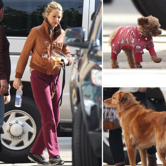 Blake Lively Pictures in Sweatpants With Her Dogs on Gossip Girl Set