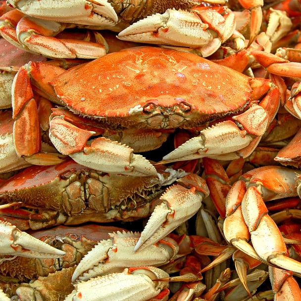 How to Buy Crab and Lobster | POPSUGAR Food