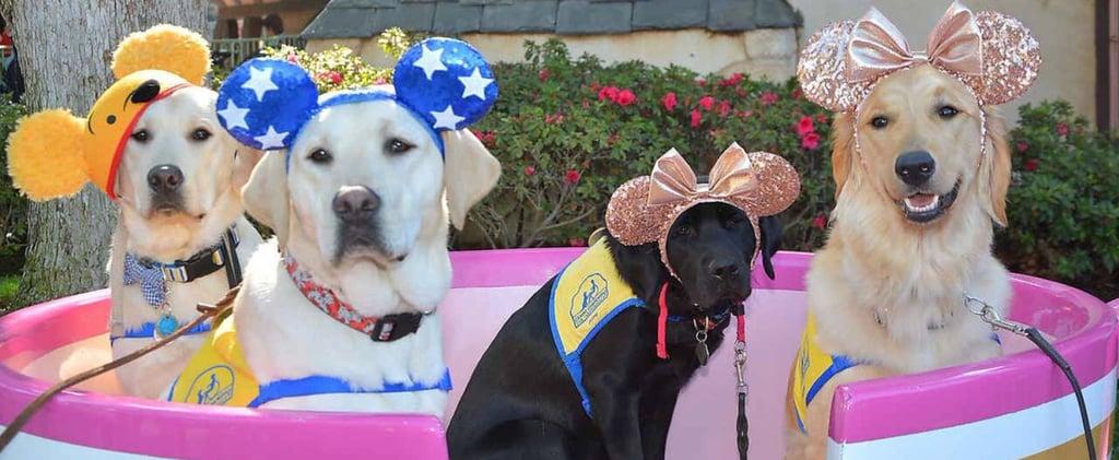 Photos of Service Dogs at Disneyland 2018