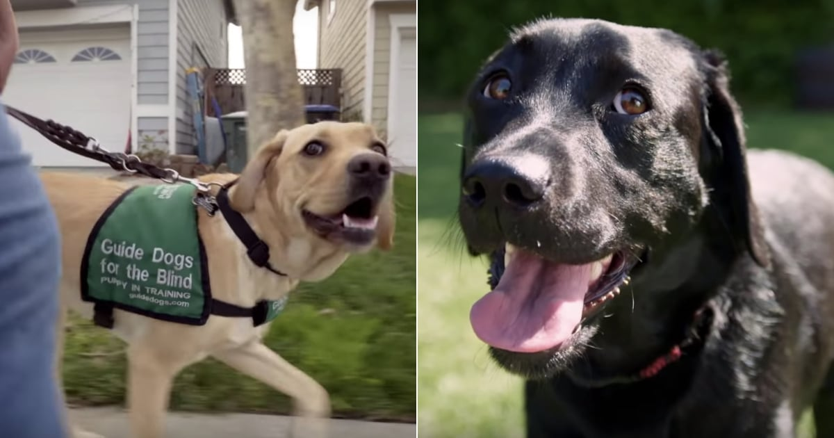 Disney+'s Pick of the Litter Will Follow 6 Dogs on the Path to Becoming Guide Dogs.jpg