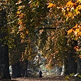 In India, a woman walked among the maple trees in Srinagar.
