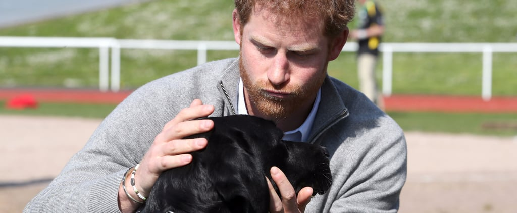 Prince Harry With Dogs Pictures