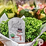 Frosty Fern ($3)