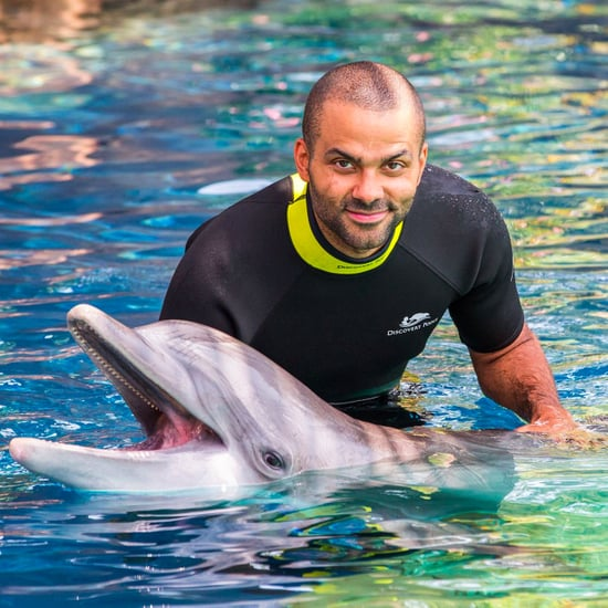 SeaWorld Abu Dhabi to Open Without Orcas By 2022