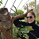 Jennifer Lopez posed with a koala bear at the zoo.