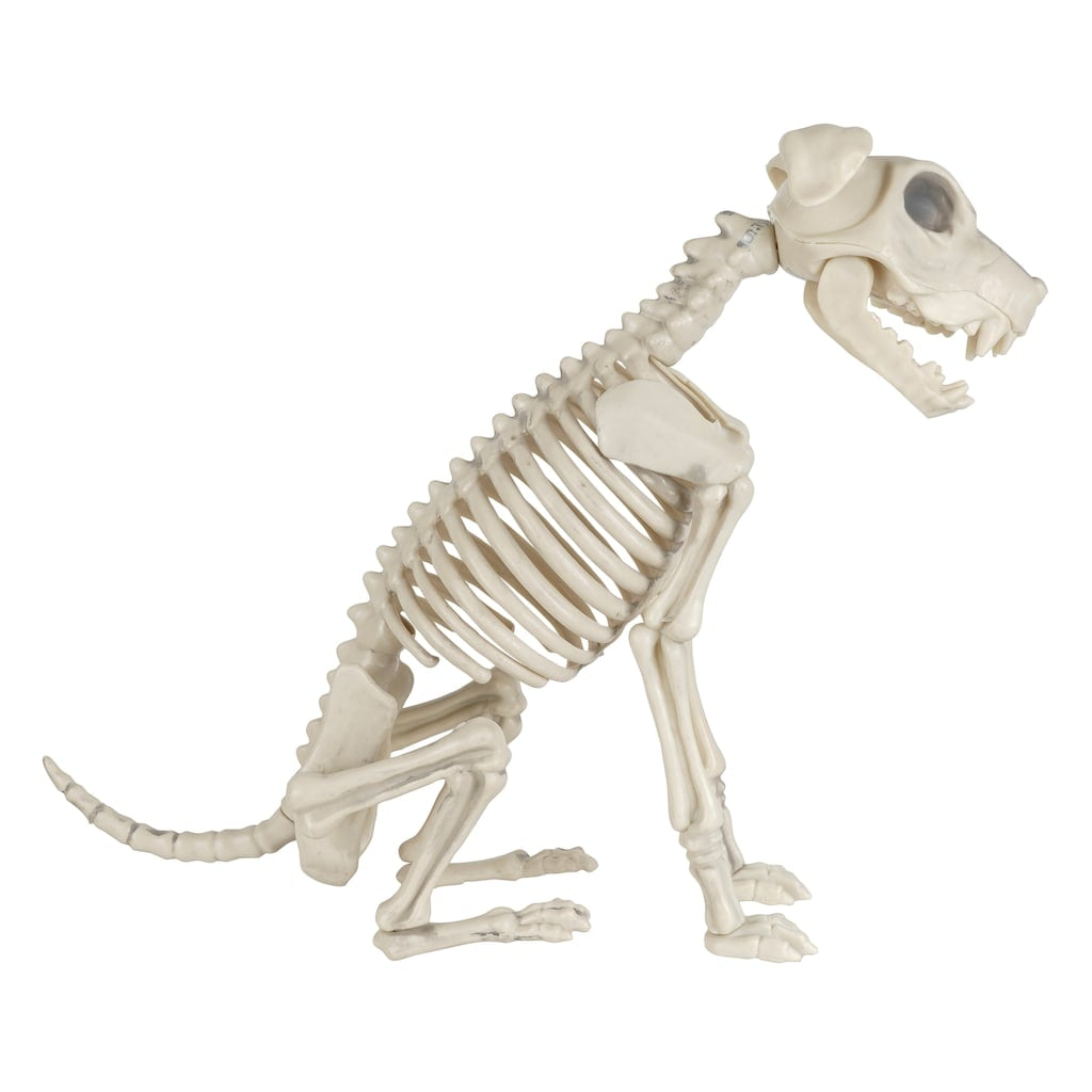 Ashland Skeleton Dog