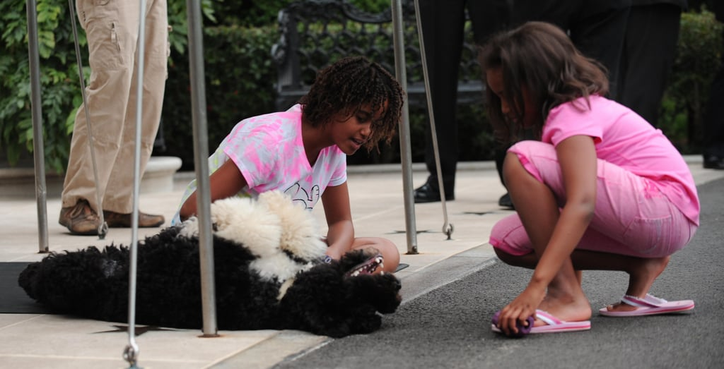 Look at These Pictures of Bo and Sunny Obama Next Time You're Feeling Down