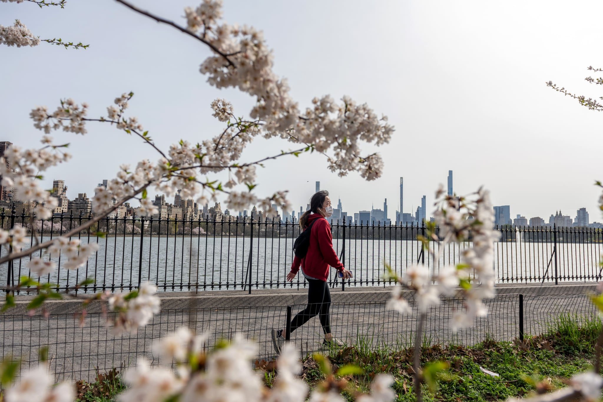 NEW YORK, NEW YORK - APRIL 10: A woman wearing a mask walks along the Jacqueline Kennedy Onassis Reservoir framed by Japanese Cherry Blossom trees in Central Park amid the coronavirus pandemic  on April 10, 2021 in New York City. After undergoing various shutdown orders for the past 12 months the city is currently in phase 4 of its reopening plan, allowing for the reopening of low-risk outdoor activities, movie and television productions, indoor dining as well as the opening of movie theaters, all with capacity restrictions. (Photo by Alexi Rosenfeld/Getty Images)