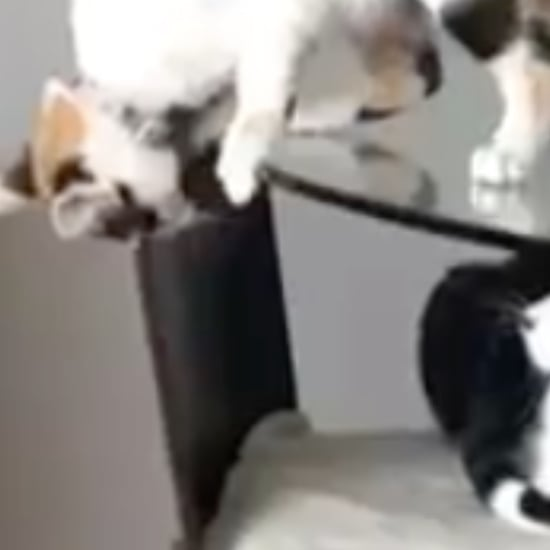 Video of Cats Playing on a Glass Table