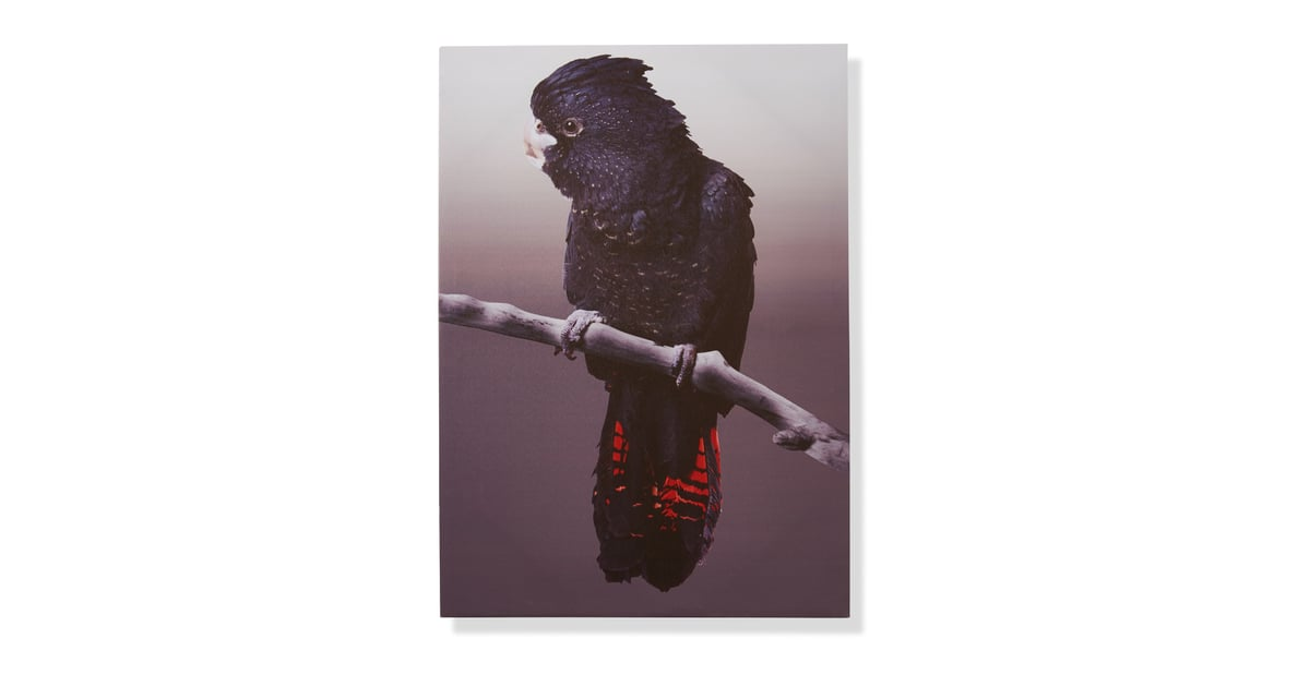 Kmart Black Cockatoo Print 14 Affordable Prints And