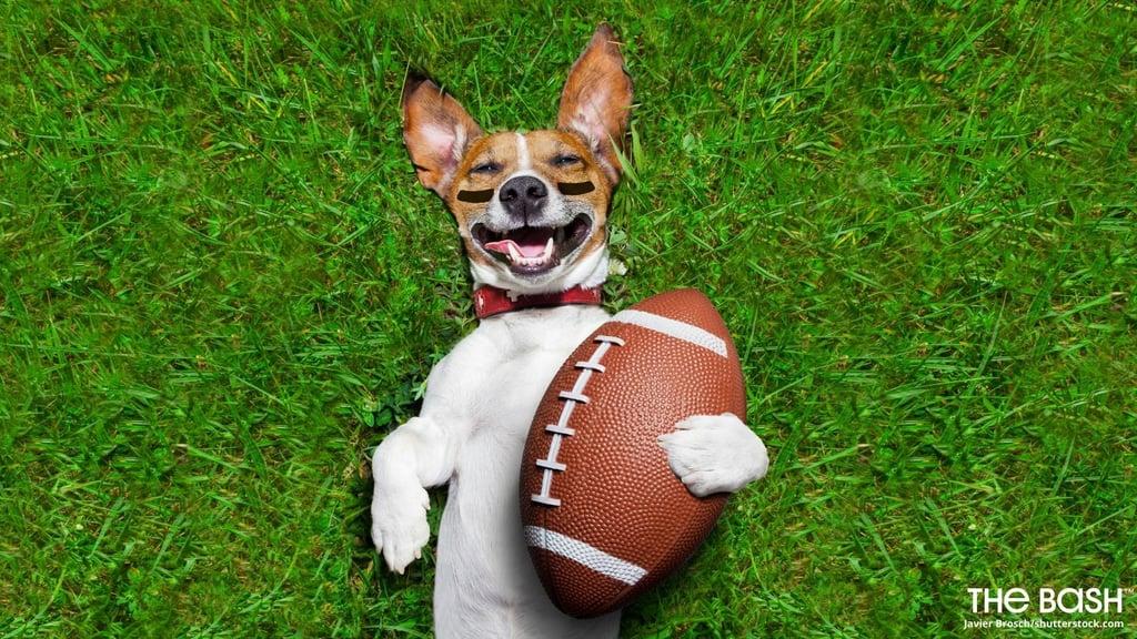 Dog Football Zoom Background