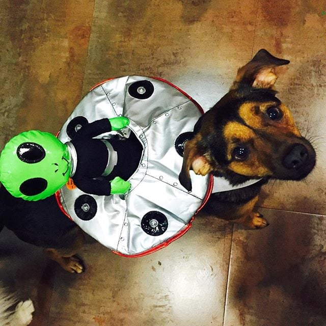 miley cyruss dogs in halloween costumes