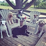 Host a Yappy Hour With Your Dog Friends