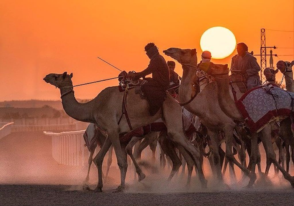 UAE Camel Races