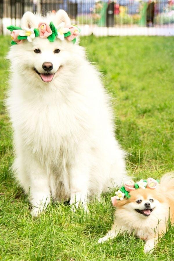 Best Dog Toys 2019