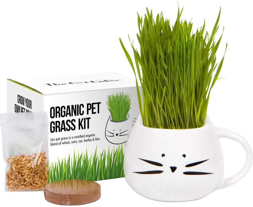Organic Cat Grass Growing Kit