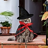 Vampire Cape and Hat Cat Costume
