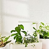 Click and Grow Smart Herb Garden Starter Kit