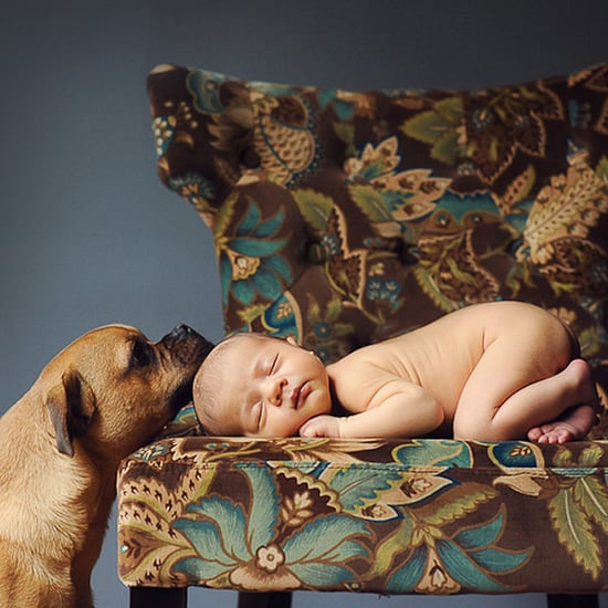 Adorable Newborn and Pet Photos