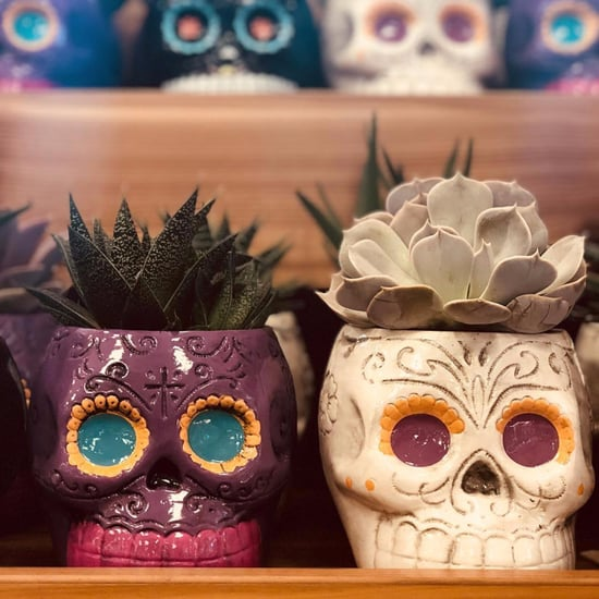 Skull Planters From Trader Joe's Fall 2017