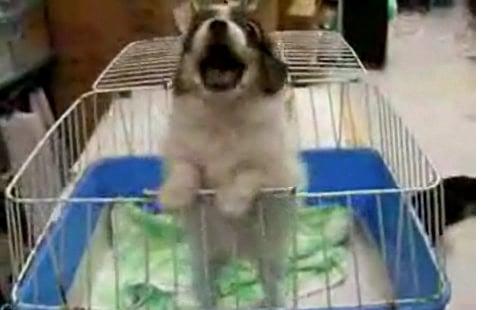 Cute Alert: Puppy Loves Elmo