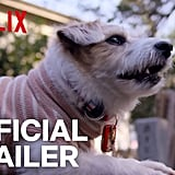 The Official Trailer For Dogs