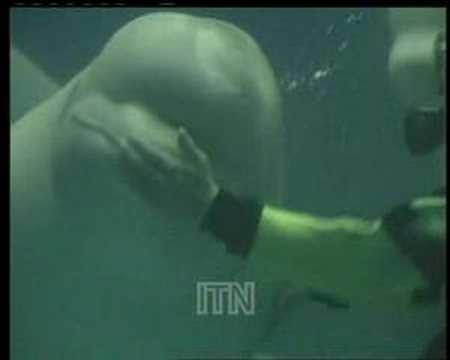 Super-Cute Video: Baby Belugas Blowing Bubbles