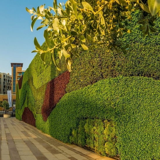 أكبر جدار أخضر بالشرق الأوسط في دبي