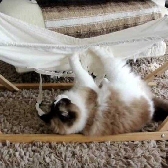 فيديو لقطّ يحاول صعود الأرجوحة