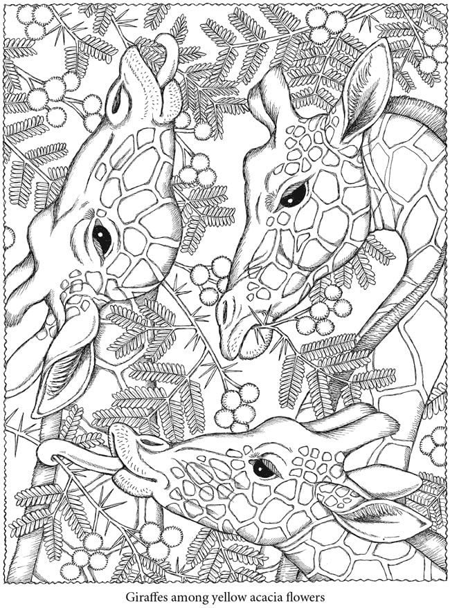 Get the coloring page: Giraffes | Free Coloring Pages For Adults ...