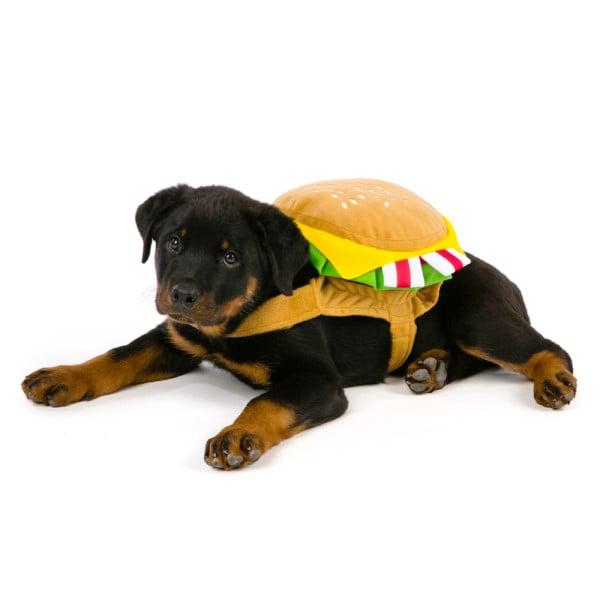 Best Dog Food For Rottweiler Pups