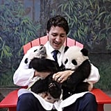 When He Cuddled With Some Baby Pandas
