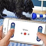 Smart Bone For Dogs