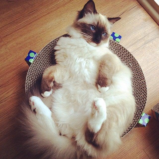Decoding the Mysteries of Internet Cat Speak